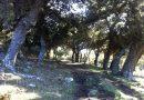 Ruta del mes: Entre Sardones y un altar