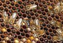 La Junta apoyará al sector apícola reivindicando la modificación de la normativa de movimientos de explotaciones y la necesidad de un etiquetado claro