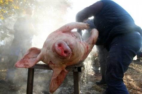 León sacrifica cada año unos 4.000 cerdos para autoconsumo en matanzas en los pueblos