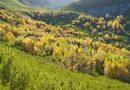 Nueva serie divulgativa «Los montes de Castilla y León», con el lema «Conoce, cuida, comparte», para celebrar el Día Internacional de los Bosques